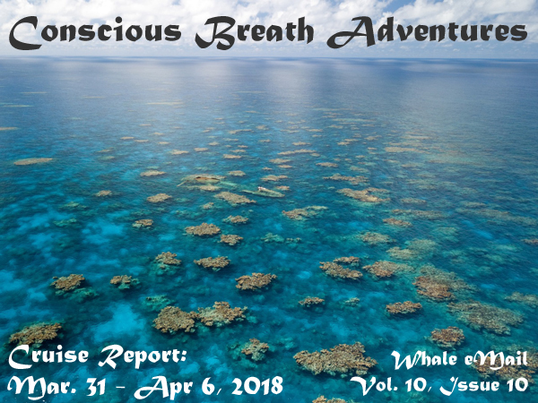 Cruise Report, Week 10: Mar. 31 – Apr. 7, 2018 – Conscious Breath Adventures