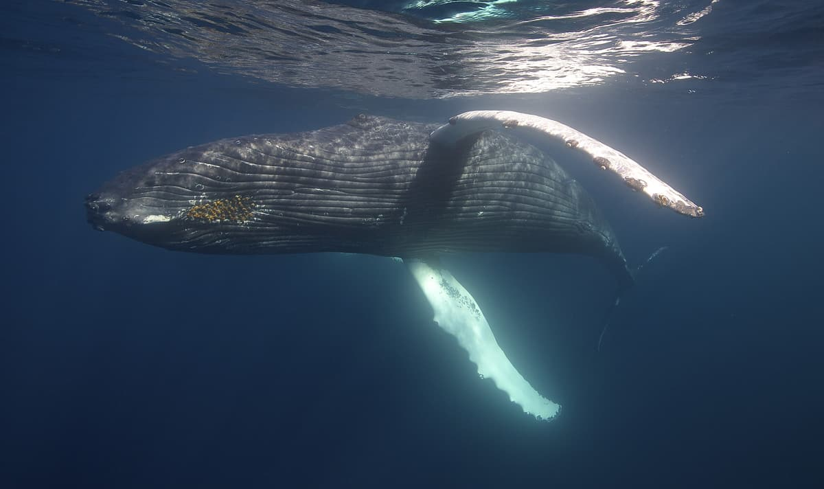 Swim With Whales - Conscious Breath Adventures