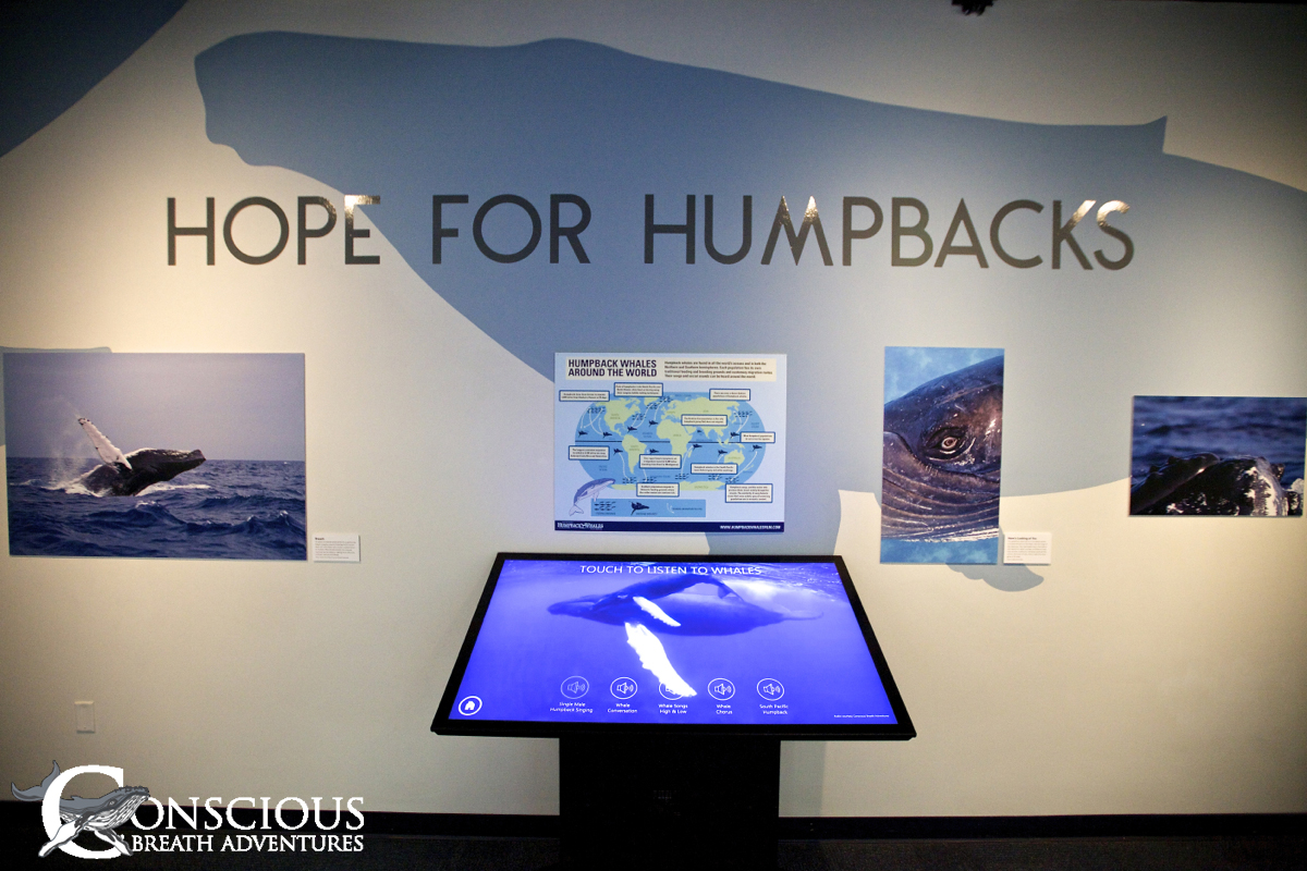 """Hope for Humpbacks"": A Collaboration with the Florida Museum of Natural History"