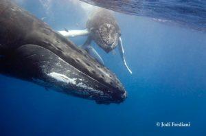 Scuff-faced humpback whale