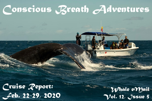 Conscious Breath Adventures Cruise Report, Week 5: Feb 22-29, 2020