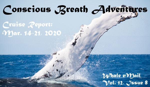 Our last Cruise Report of the 2020 Silver Bank humpback whale season